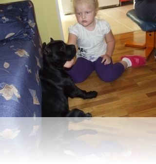 Dete i pas / Child with a dog